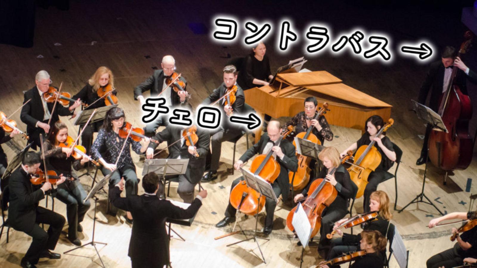 【チェロとコントラバス】見分け方、音域の違いは?デュオ(二重奏)の曲もご紹介!